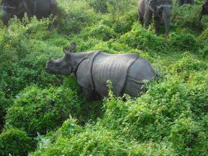 Anuj Kumar Airi_Nature and Wildlife_1